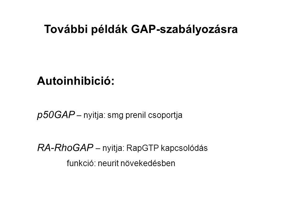 Autoinhibició: p50GAP – nyitja: smg prenil csoportja RA-RhoGAP – nyitja: RapGTP kapcsolódás funkció: neurit növekedésben További példák GAP-szabályozásra