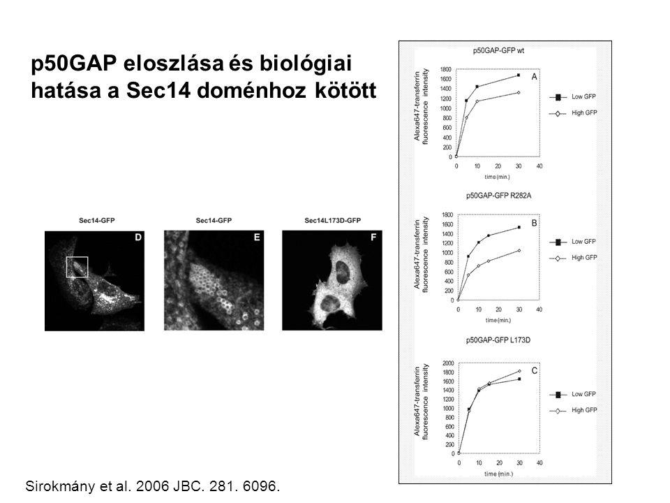 p50GAP eloszlása és biológiai hatása a Sec14 doménhoz kötött Sirokmány et al. 2006 JBC. 281. 6096.