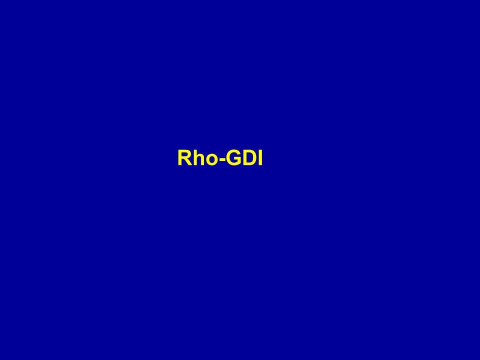 Rho-GDI