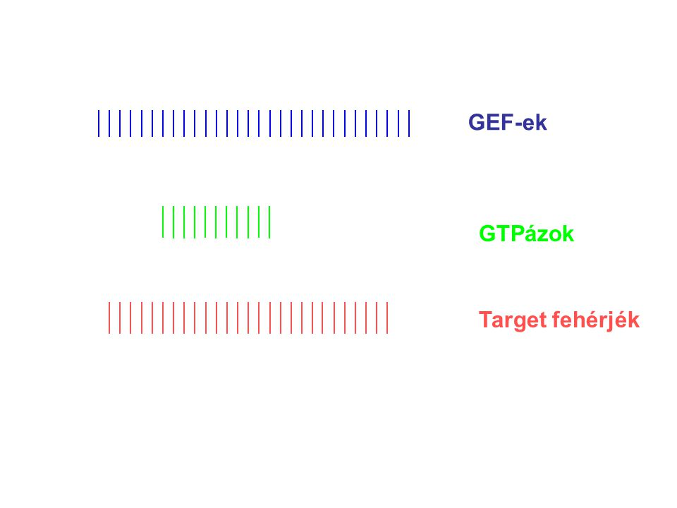 PH/DHRGS p115RhoGEF Rho CNK1 target/scaffold fehérje MLK2 kináz Jun → Jun-P