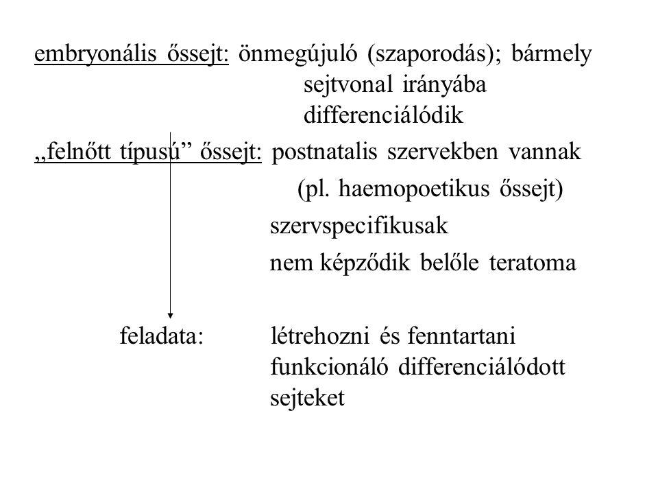 embryonális őssejt: önmegújuló (szaporodás); bármely sejtvonal irányába differenciálódik,,felnőtt típusú őssejt: postnatalis szervekben vannak (pl.