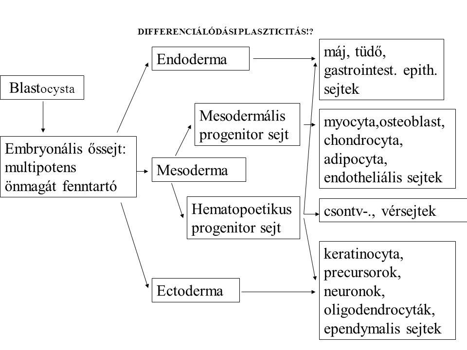 Megoldandó feladatok: honnan és hogyan nyerhető elegendő számú multipotens vagy szervspecifikus őssejt.