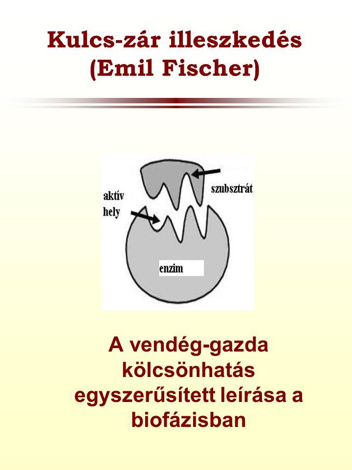 Kulcs-zár illeszkedés (Emil Fischer) A vendég-gazda kölcsönhatás egyszerűsített leírása a biofázisban