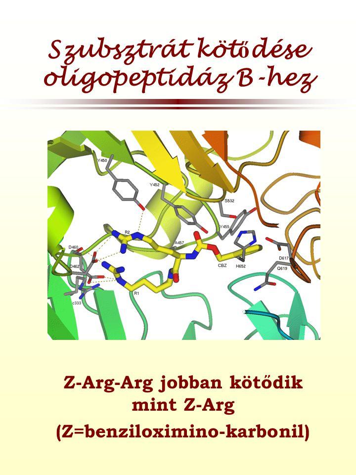 Szubsztrát köt ő dése oligopeptidáz B-hez Z-Arg-Arg jobban kötődik mint Z-Arg (Z=benziloximino-karbonil)
