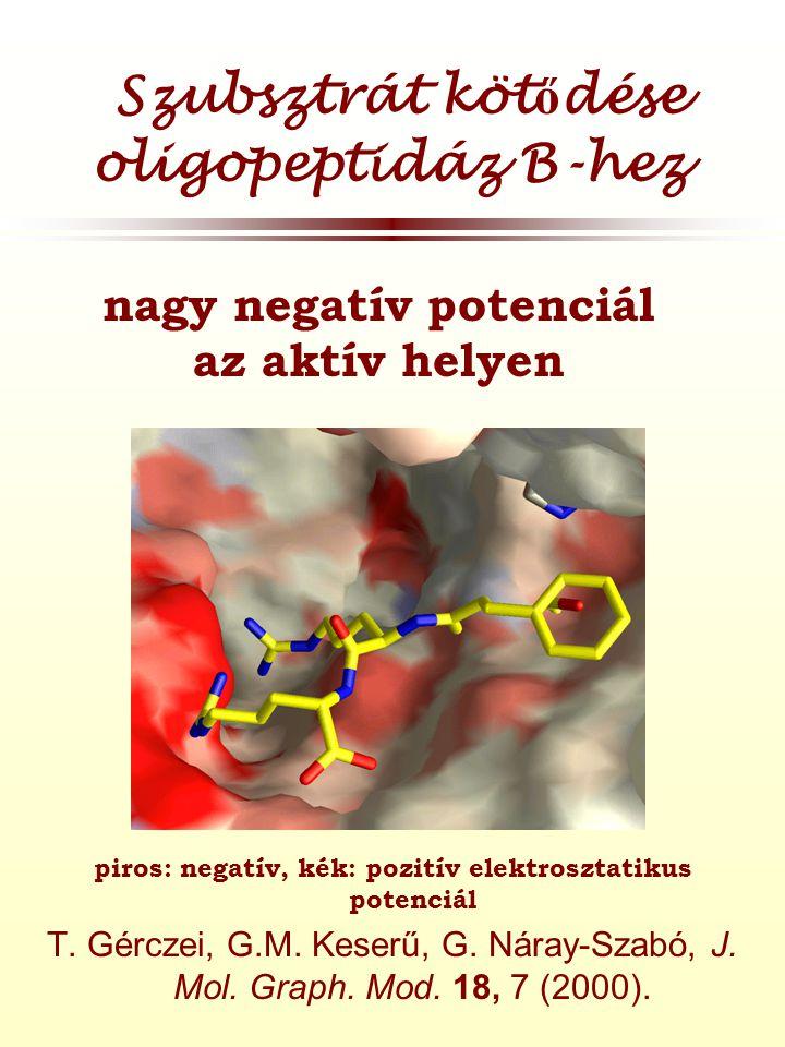 Szubsztrát köt ő dése oligopeptidáz B-hez piros: negatív, kék: pozitív elektrosztatikus potenciál T.