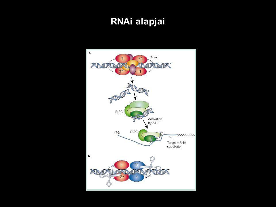 RNAi alapjai