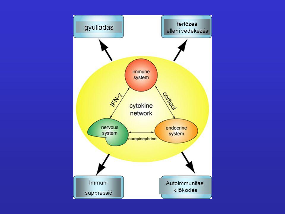 gyulladás fertőzés elleni védekezés Immun- suppressió Autoimmunitás, kilökődés