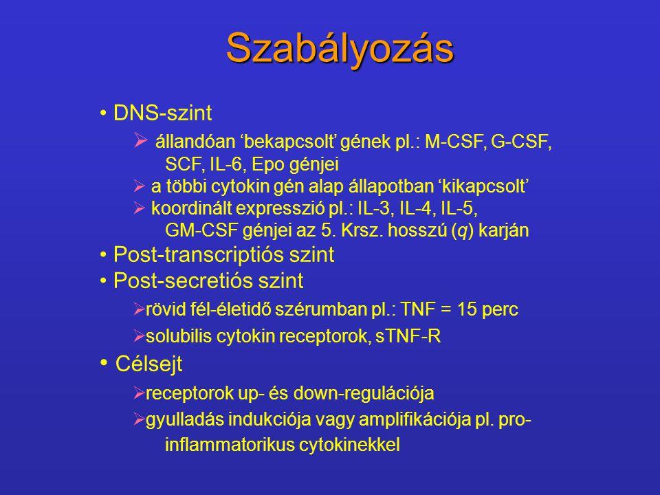 Szabályozás DNS-szint  állandóan 'bekapcsolt' gének pl.: M-CSF, G-CSF, SCF, IL-6, Epo génjei  a többi cytokin gén alap állapotban 'kikapcsolt'  koo