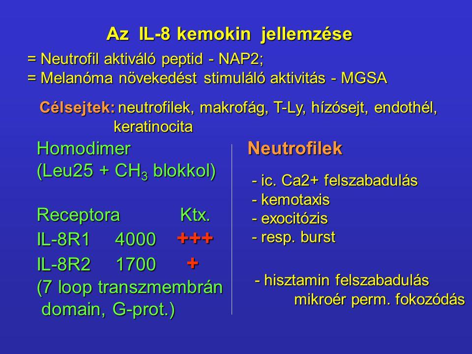 Az IL-8 kemokin jellemzése = Neutrofil aktiváló peptid - NAP2; = Melanóma növekedést stimuláló aktivitás - MGSA Neutrofilek - ic. Ca2+ felszabadulás -