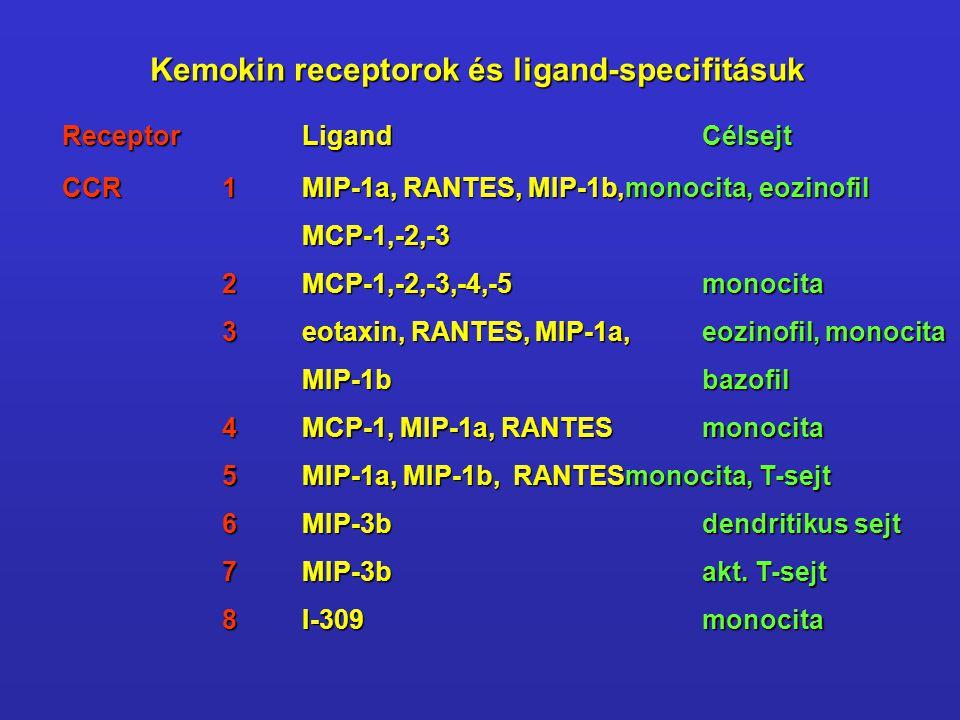 ReceptorLigandCélsejt CCR1MIP-1a, RANTES, MIP-1b,monocita, eozinofil MCP-1,-2,-3 2MCP-1,-2,-3,-4,-5monocita 3eotaxin, RANTES, MIP-1a,eozinofil, monoci