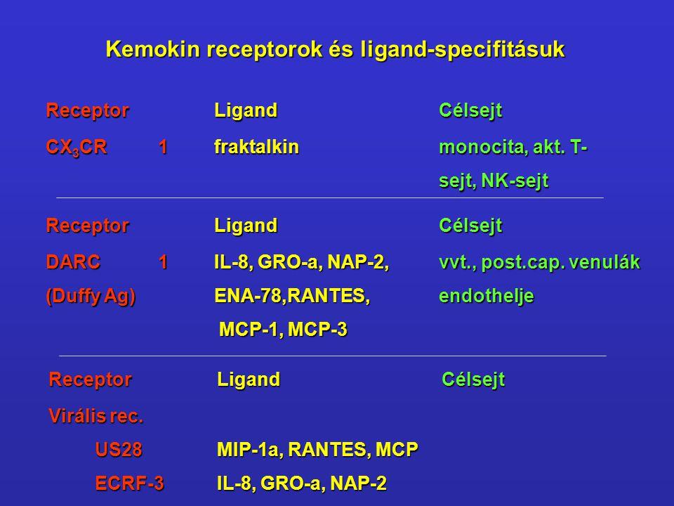 ReceptorLigandCélsejt CX 3 CR1fraktalkin monocita, akt. T- sejt, NK-sejt ReceptorLigandCélsejt DARC1IL-8, GRO-a, NAP-2,vvt., post.cap. venulák (Duffy