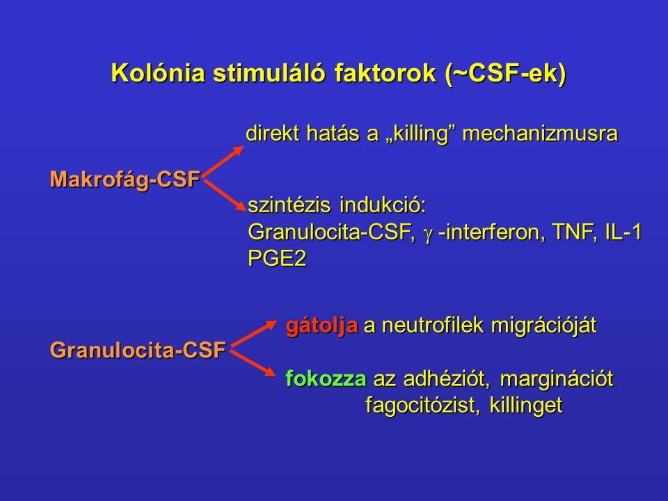 """Kolónia stimuláló faktorok (~CSF-ek) Makrofág-CSF direkt hatás a """"killing"""" mechanizmusra szintézis indukció: Granulocita-CSF,  -interferon, TNF, IL-"""