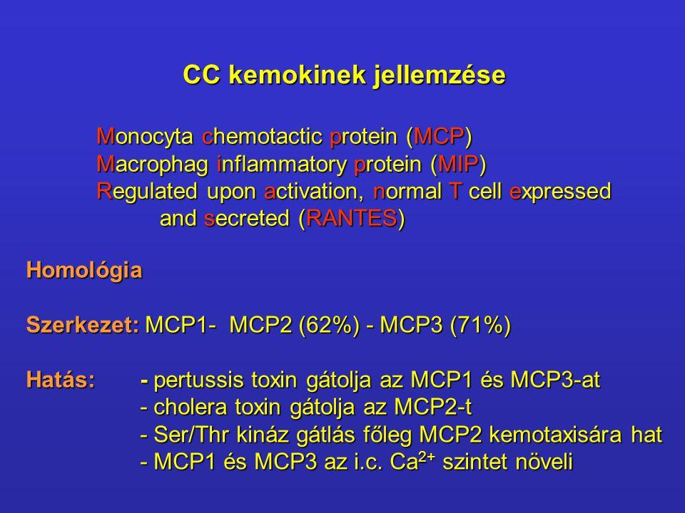 CC kemokinek jellemzése Monocyta chemotactic protein (MCP) Macrophag inflammatory protein (MIP) Regulated upon activation, normal T cell expressed and secreted (RANTES) and secreted (RANTES) Homológia Szerkezet: MCP1- MCP2 (62%) - MCP3 (71%) Hatás: - pertussis toxin gátolja az MCP1 és MCP3-at - cholera toxin gátolja az MCP2-t - Ser/Thr kináz gátlás főleg MCP2 kemotaxisára hat - MCP1 és MCP3 az i.c.
