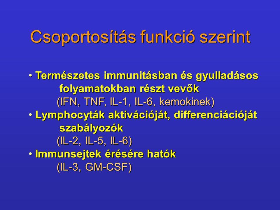 Néhány példa IL-1 - az összes sejtmaggal rendelkező sejt termelheti, biológiai hatásspektruma széles, számos célsejten.