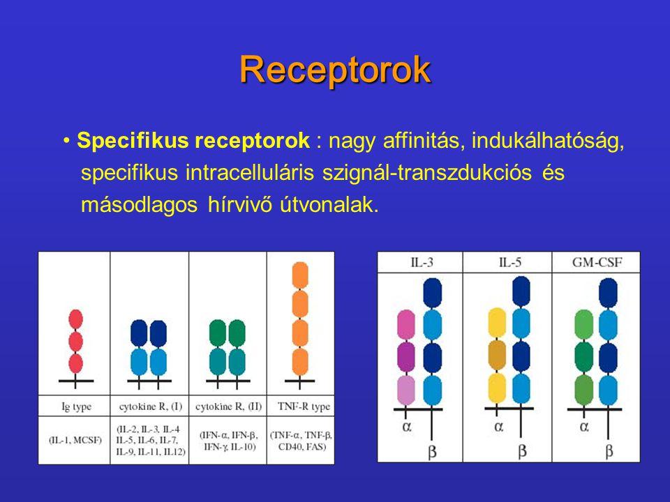 Receptorok Specifikus receptorok : nagy affinitás, indukálhatóság, specifikus intracelluláris szignál-transzdukciós és másodlagos hírvivő útvonalak.