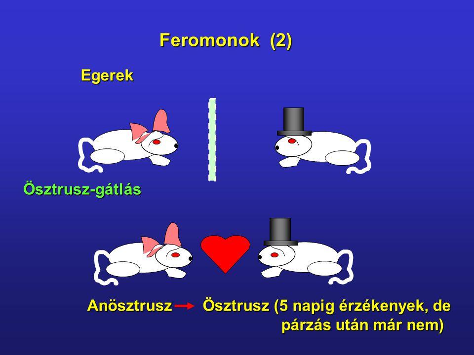 Feromonok (2) Egerek Ösztrusz-gátlás Anösztrusz Ösztrusz (5 napig érzékenyek, de párzás után már nem) párzás után már nem)