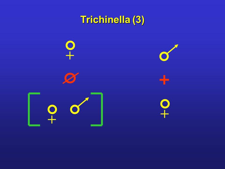 + ++ Trichinella (3)