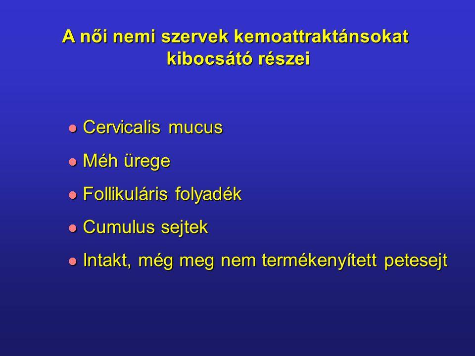 A női nemi szervek kemoattraktánsokat kibocsátó részei Cervicalis mucus Cervicalis mucus Méh ürege Méh ürege Follikuláris folyadék Follikuláris folyadék Cumulus sejtek Cumulus sejtek Intakt, még meg nem termékenyített petesejt Intakt, még meg nem termékenyített petesejt