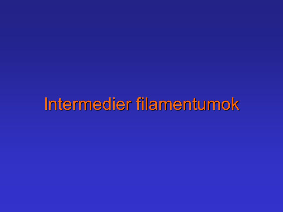 Intermedier filamentumok
