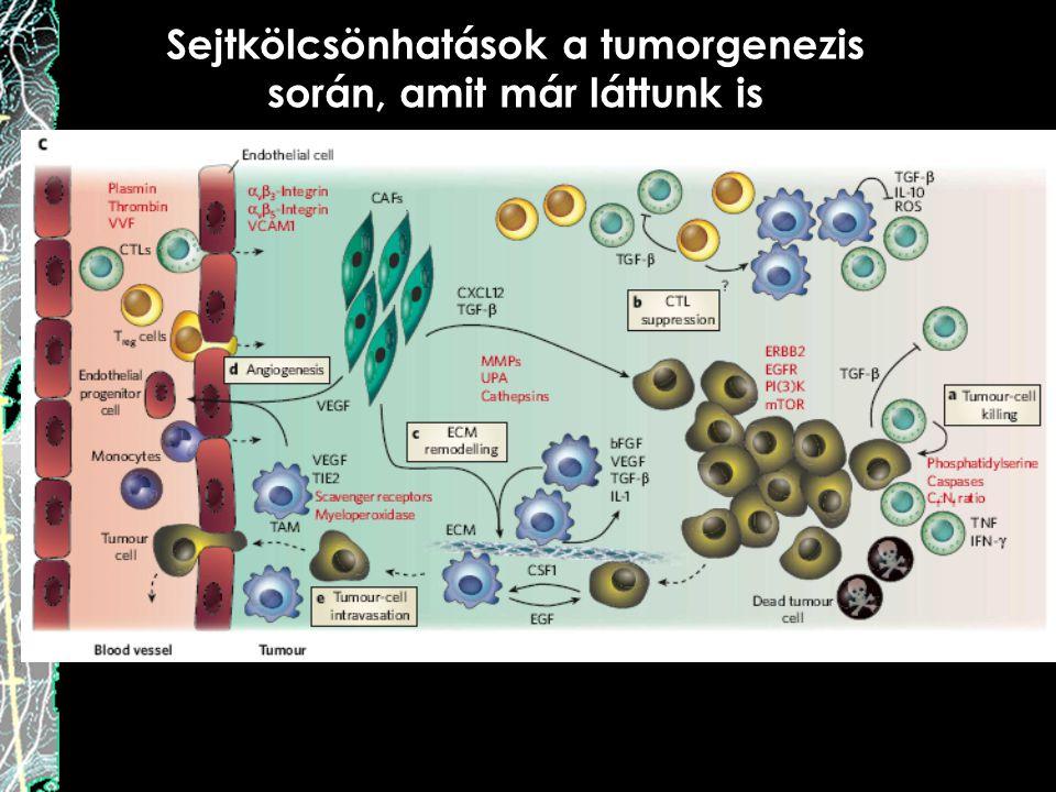Sejtkölcsönhatások a tumorgenezis során, amit már láttunk is