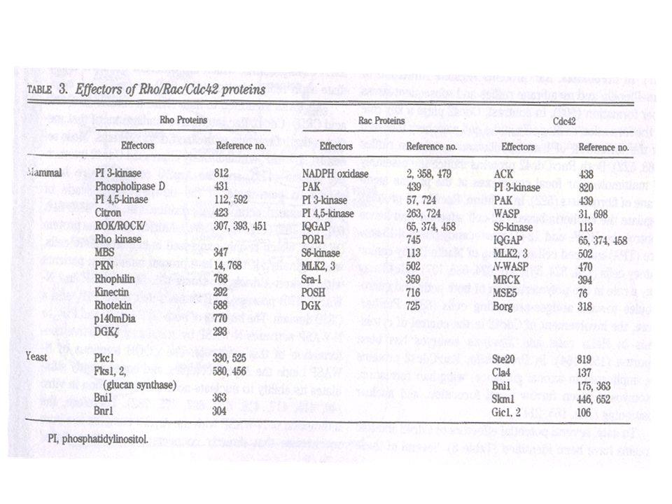 Hall, 1998, Science, 279, 509-514.