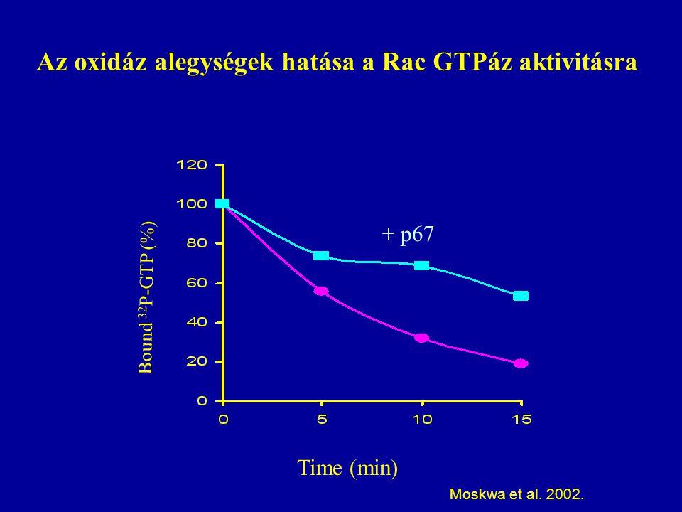 Bound 32 P-GTP (%) Time (min) Az oxidáz alegységek hatása a Rac GTPáz aktivitásra + p67 Moskwa et al.