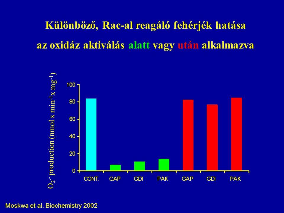 Különböző, Rac-al reagáló fehérjék hatása az oxidáz aktiválás alatt vagy után alkalmazva O 2.- production (nmol x min -1 x mg -1 ) Moskwa et al.