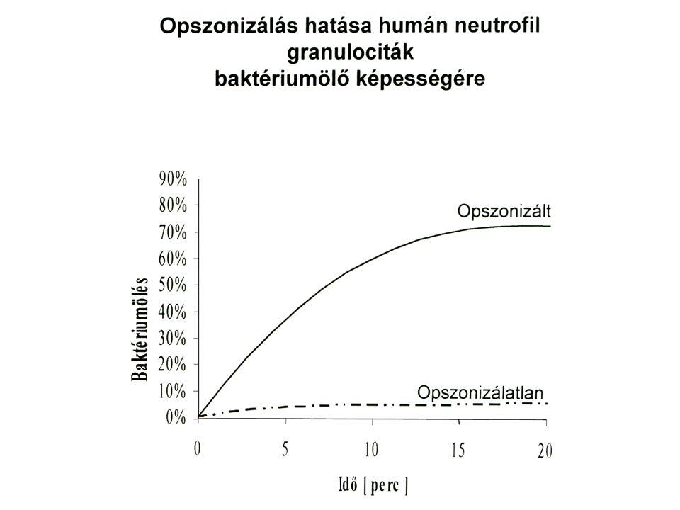 Fc gamma receptor által mediált fagocitózis CR3 által mediált fagocitózis Allen and Aderem, J Exp Med, 1996, 184.
