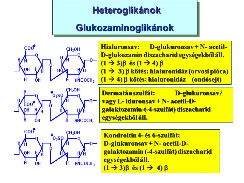 Heteroglikánok Heteroglikánok Glukozaminoglikánok Heteroglikánok Heteroglikánok Glukozaminoglikánok Hialuronsav:D-glukuronsav + N- acetil- D-glukozami