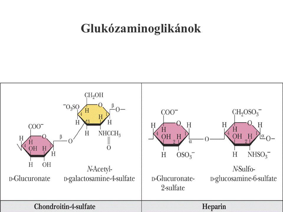 130 Glukózaminoglikánok