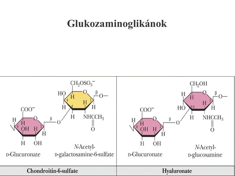 131 Glukozaminoglikánok