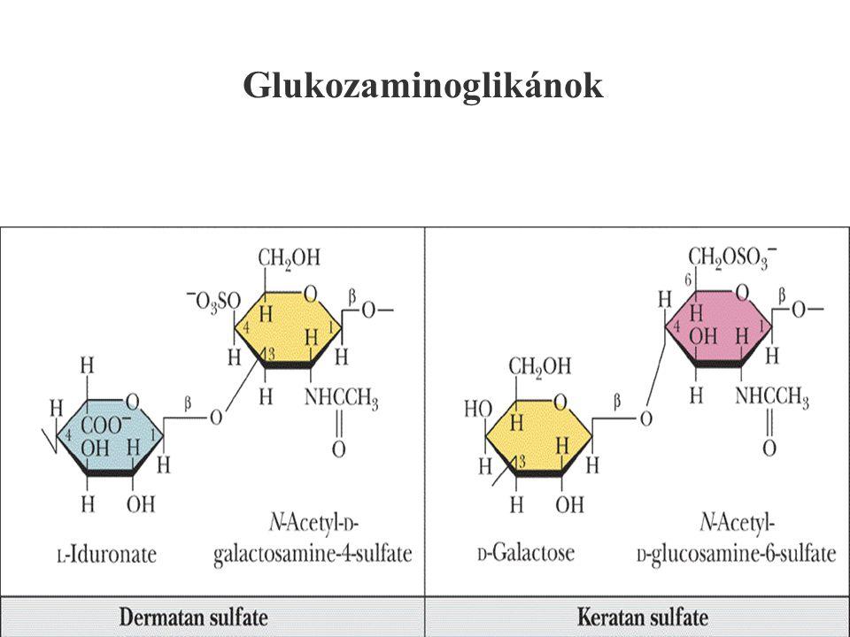 132 Glukozaminoglikánok
