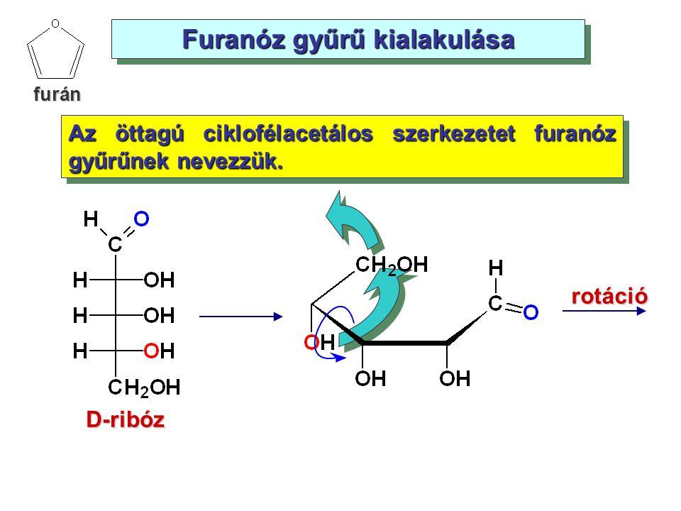 Furanóz gyűrű kialakulása Az öttagú ciklofélacetálos szerkezetet furanóz gyűrűnek nevezzük. rotáció D-ribóz furán