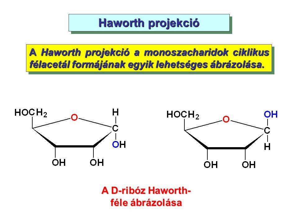 Haworth projekció A Haworth projekció a monoszacharidok ciklikus félacetál formájának egyik lehetséges ábrázolása. A D-ribóz Haworth- féle ábrázolása