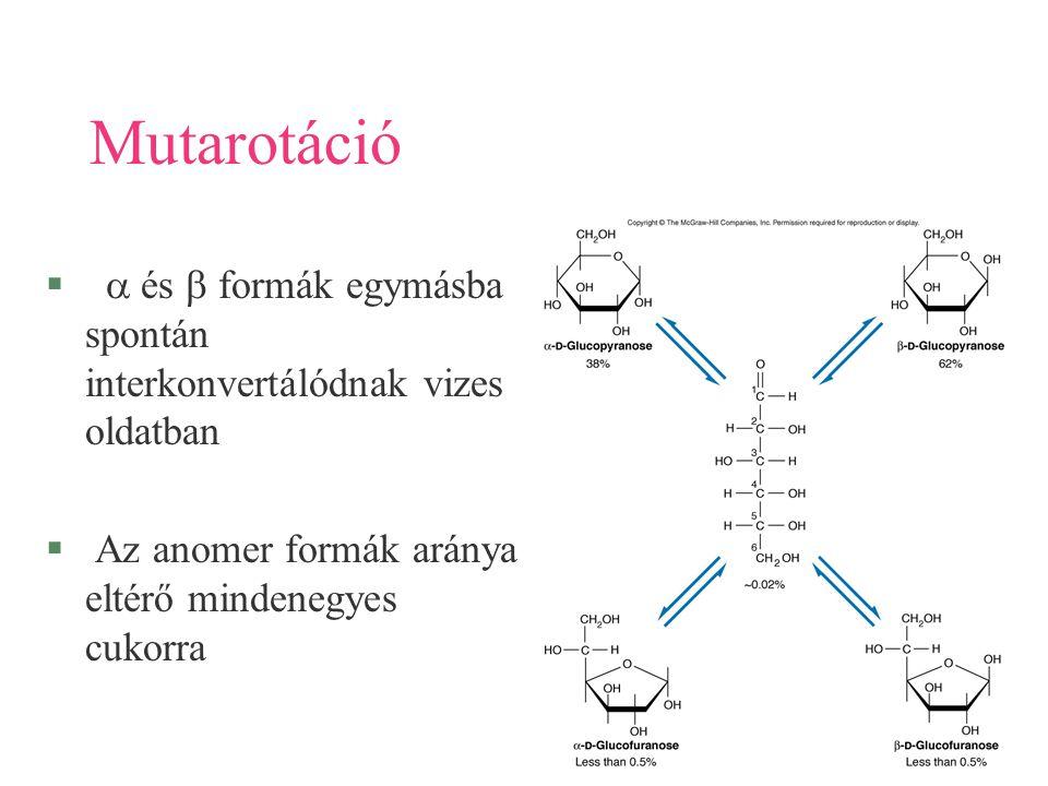 48 Mutarotáció   és  formák egymásba spontán interkonvertálódnak vizes oldatban § Az anomer formák aránya eltérő mindenegyes cukorra
