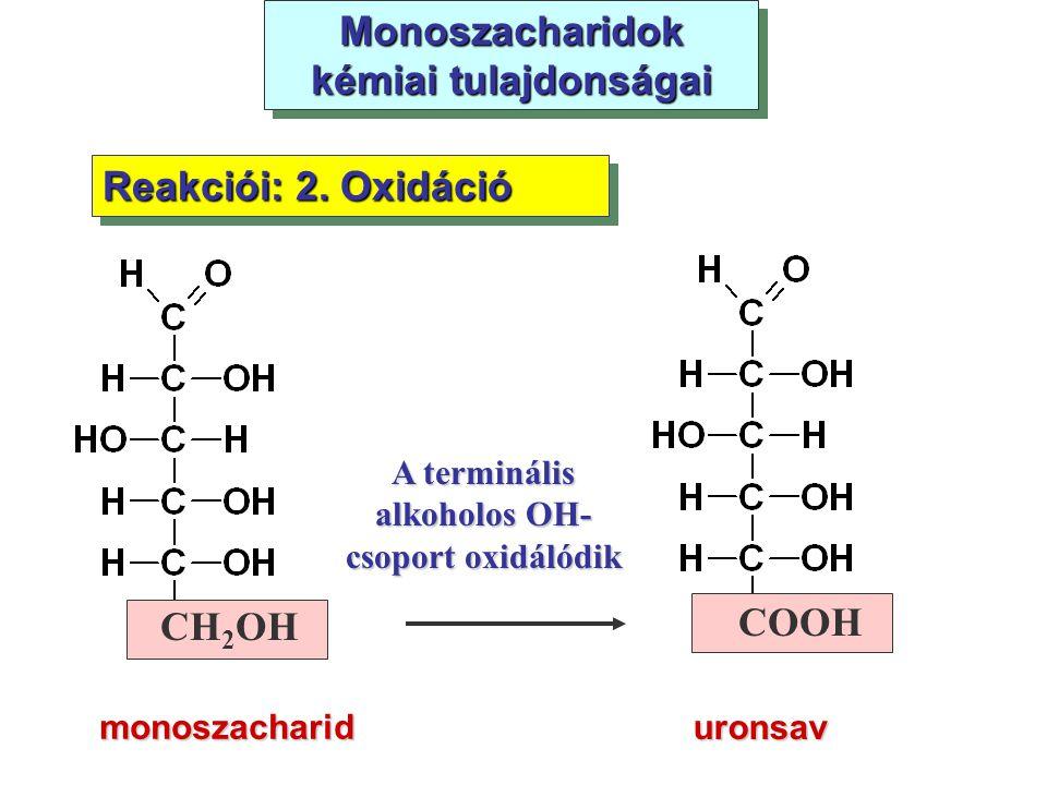 Monoszacharidok kémiai tulajdonságai monoszacharid Reakciói: 2. Oxidáció uronsav CH 2 OH COOH A terminális alkoholos OH- csoport oxidálódik