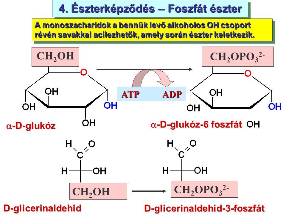 4. Észterképződés – Foszfát észter  -D-glukóz CH 2 OH CH 2 OPO 3 2-  -D-glukóz-6 foszfát CH 2 OH CH 2 OPO 3 2- D-glicerinaldehid-3-foszfát D-gliceri