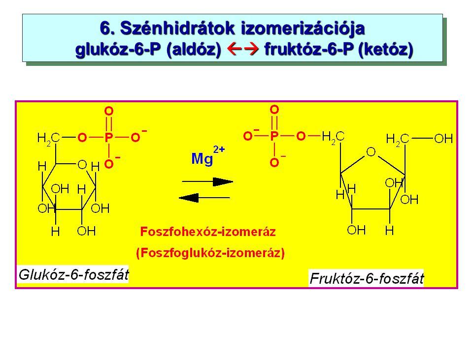 6. Szénhidrátok izomerizációja glukóz-6-P (aldóz)  fruktóz-6-P (ketóz) glukóz-6-P (aldóz)  fruktóz-6-P (ketóz) 6. Szénhidrátok izomerizációja gluk