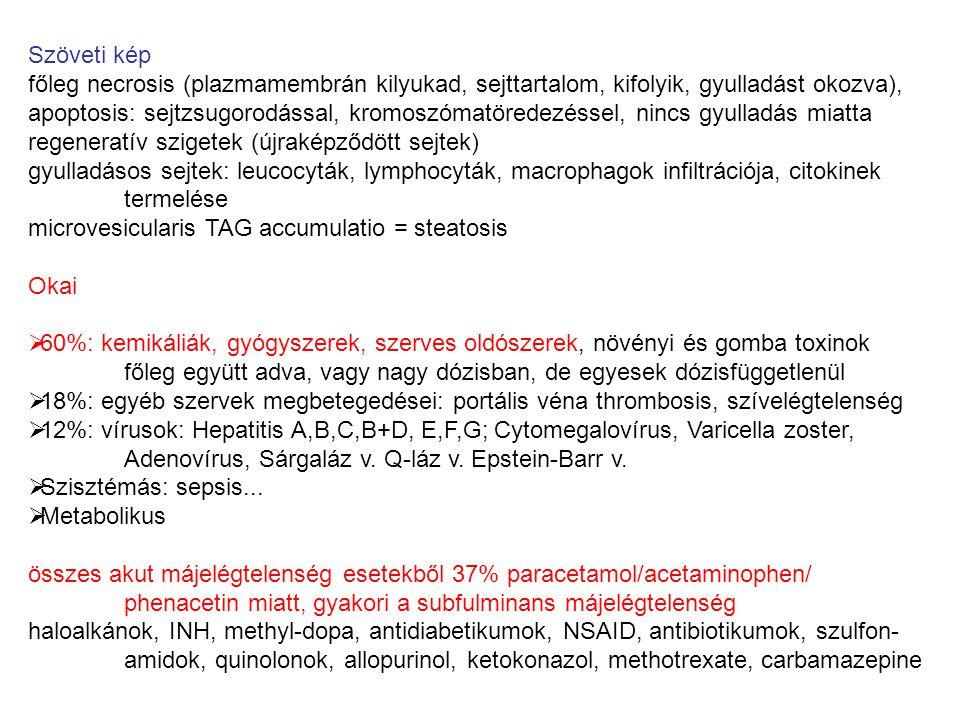 Májelégtelenség súlyossága függ 1.) Genetikai tényezők polimorfizmus miatt funkcióképesség vagy érzékenység változik (alkohol-dehidrogenáz, CYP2E1, TNFa, IL-10, PGC-1) 2.) Egyéb környezeti tényezők additív vagy szinergista hatása pl.