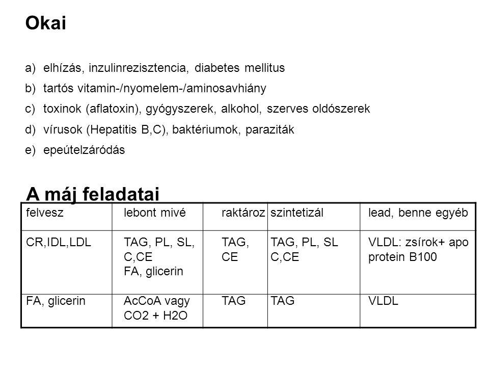 Okai a)elhízás, inzulinrezisztencia, diabetes mellitus b)tartós vitamin-/nyomelem-/aminosavhiány c)toxinok (aflatoxin), gyógyszerek, alkohol, szerves oldószerek d)vírusok (Hepatitis B,C), baktériumok, paraziták e)epeútelzáródás A máj feladatai felveszlebont mivéraktározszintetizállead, benne egyéb CR,IDL,LDLTAG, PL, SL,TAG,TAG, PL, SLVLDL: zsírok+ apo C,CECEC,CEprotein B100 FA, glicerin FA, glicerinAcCoA vagyTAGTAGVLDL CO2 + H2O