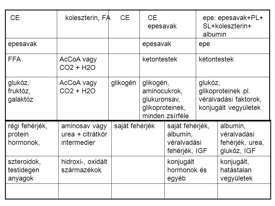 Zsírmáj = steatosis kialakulásának okai (TAG 5% → 50%) 1.) elhízás, túltáplálás tápanyagfelvétel ↑→ inzulinszekréció ↑→ TAG ↑ és apoprotB100 degr.
