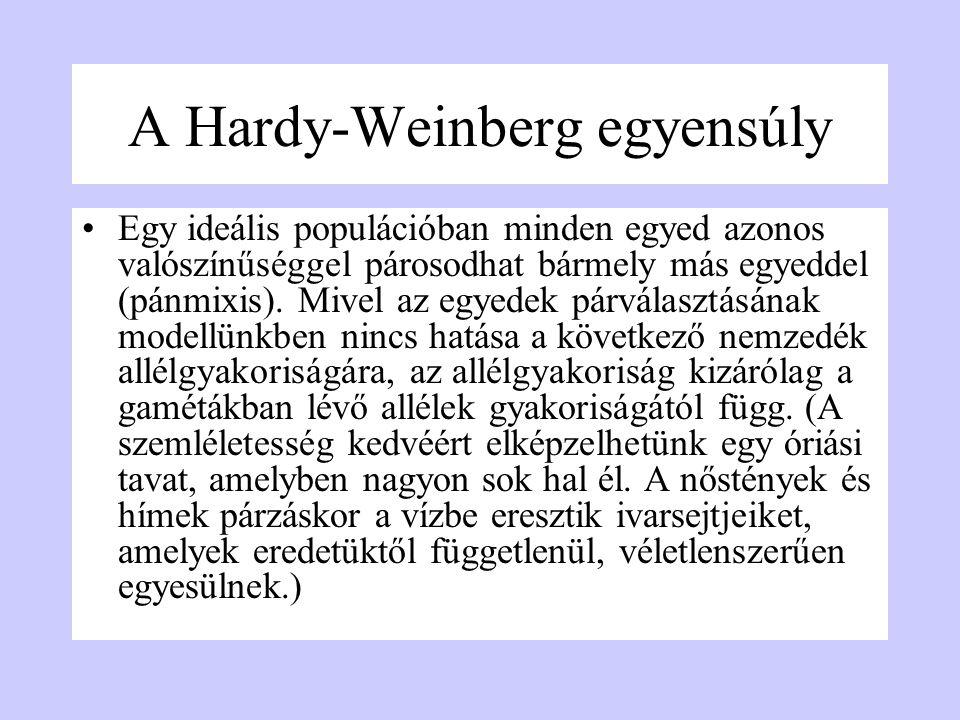 A Hardy-Weinberg egyensúly Egy ideális populációban minden egyed azonos valószínűséggel párosodhat bármely más egyeddel (pánmixis). Mivel az egyedek p