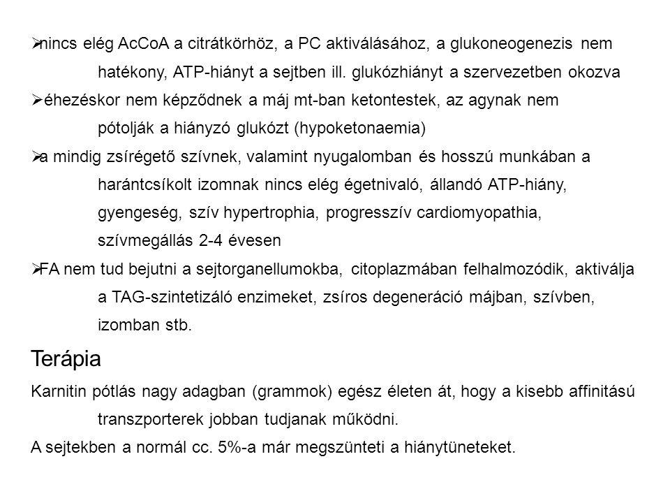  nincs elég AcCoA a citrátkörhöz, a PC aktiválásához, a glukoneogenezis nem hatékony, ATP-hiányt a sejtben ill.