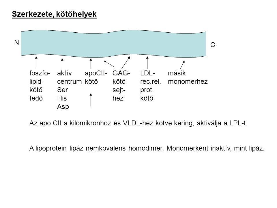 Szerkezete, kötőhelyek foszfo-aktívapoCII-GAG-LDL-másik lipid-centrumkötőkötőrec.rel.monomerhez kötőSersejt-prot. fedőHishezkötő Asp Az apo CII a kilo