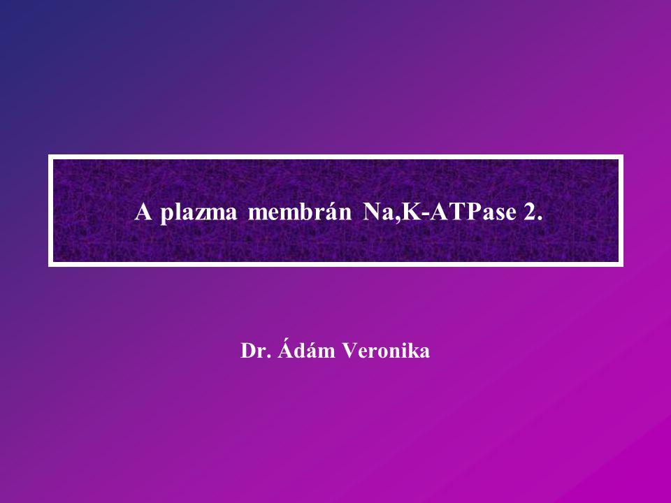 Vezikuláris neurotranszmitter antiporter 12 transzmembrán szegmens Proton antiporter (vezikuláris membrán antiporterek, VMAT) széles szelektivitás: DA, NA, szerotonin VMAT1 agy, perifériás neuroendokrin sejtek VMAT2 neuronok, mellékvese kromaffin sejtek hisztamint is transzportál VAChT kolinerg szinapszisokban H + ionofórokkal gátolható