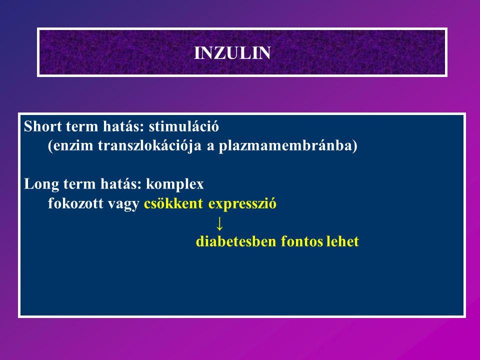 INZULIN Short term hatás: stimuláció (enzim transzlokációja a plazmamembránba) Long term hatás: komplex fokozott vagy csökkent expresszió ↓ diabetesbe