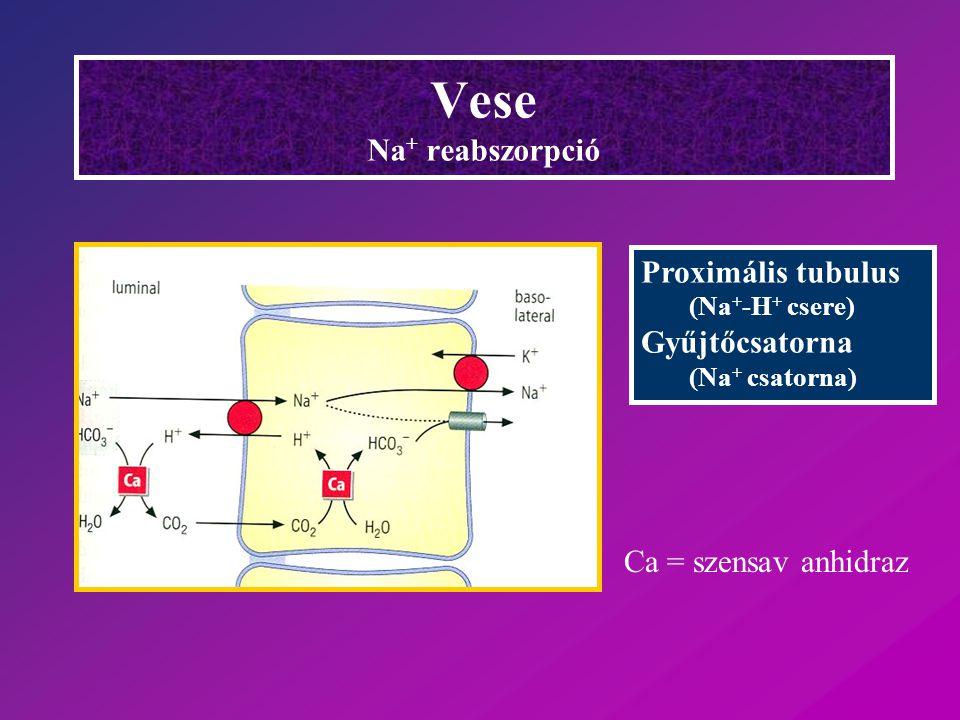 Vese Na + reabszorpció Proximális tubulus (Na + -H + csere) Gyűjtőcsatorna (Na + csatorna) Ca = szensav anhidraz
