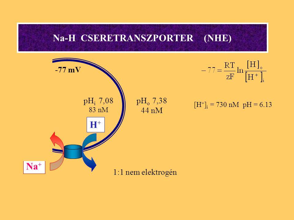 Na-H CSERETRANSZPORTER (NHE) [H + ] i = 730 nM pH = 6.13 Na + H+H+ 1:1 nem elektrogén pH i 7,08 83 nM pH o 7,38 44 nM -77 mV