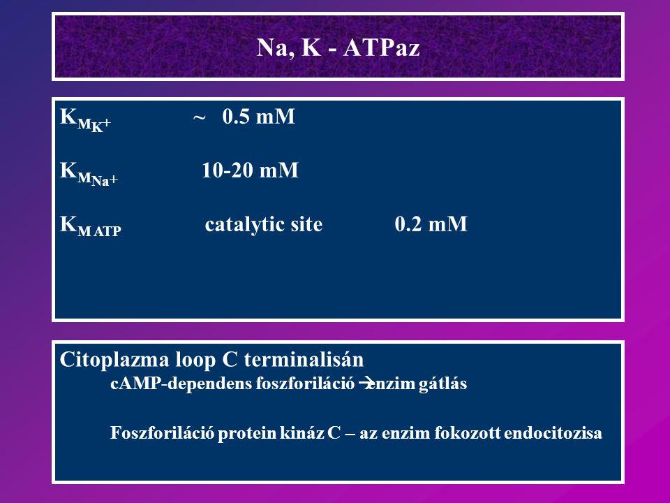A pumpa működéséhez: Na + i és K + o szükséges A [K + ] o teliti a K-kötőhelyet [Na + ] i < mint, ami az 50 %-os telitéshez szükséges A pumpa a [Na + ] i változásra reagál
