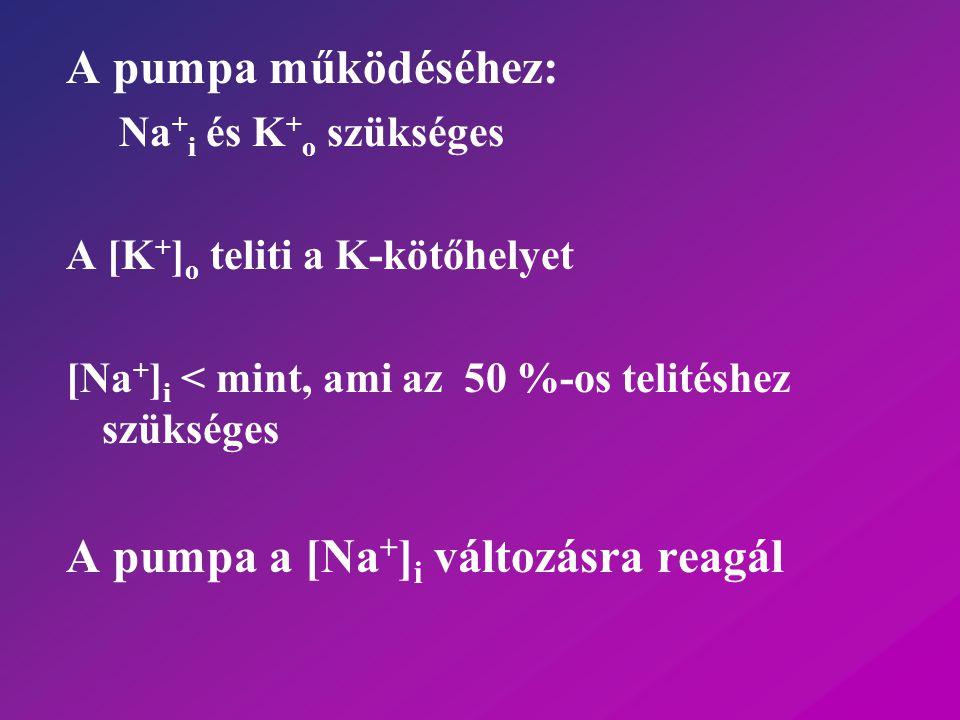A pumpa működéséhez: Na + i és K + o szükséges A [K + ] o teliti a K-kötőhelyet [Na + ] i < mint, ami az 50 %-os telitéshez szükséges A pumpa a [Na +